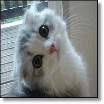 可愛い子猫画像集!癒し&おもしろ画像まとめ!