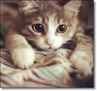 猫動画!YouTubeで300万回以上再生の超人気ネコ!