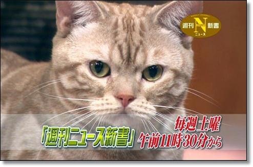 猫が自由にニュース番組に出演?テレビ東京のまーごが話題!