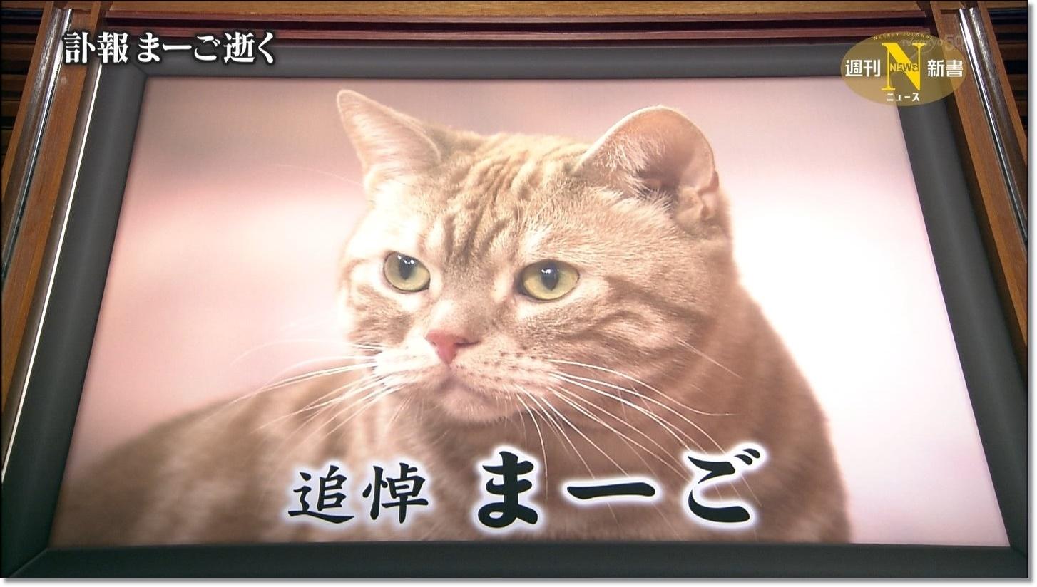 猫の心不全の症状と予防方法は?まーごの死が突然すぎる・・
